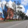 PaseodeLosHeroes-Tijuana19.jpg