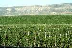 San Quintin - Campos de Cultivo